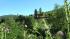FIUGGI - TORRE CAJETANI - In centinaia per i 10000 passi dell'associazione ANCDA